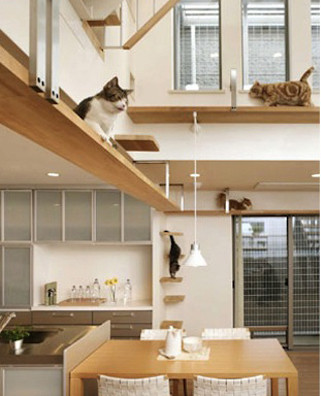 Adoro Arquitetura_Lulu Andrade_Gatos3